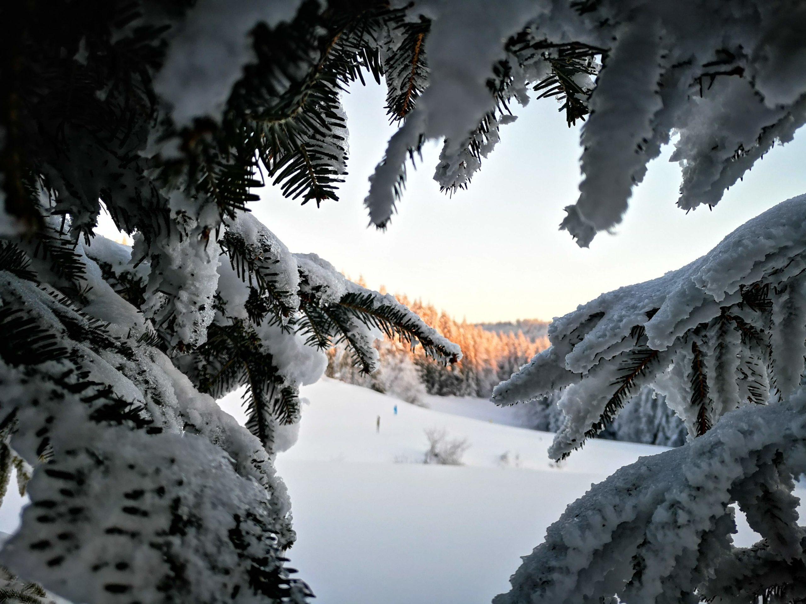 Śnieg im nie straszny. Dużo turystów w Gorcach i Pieninach
