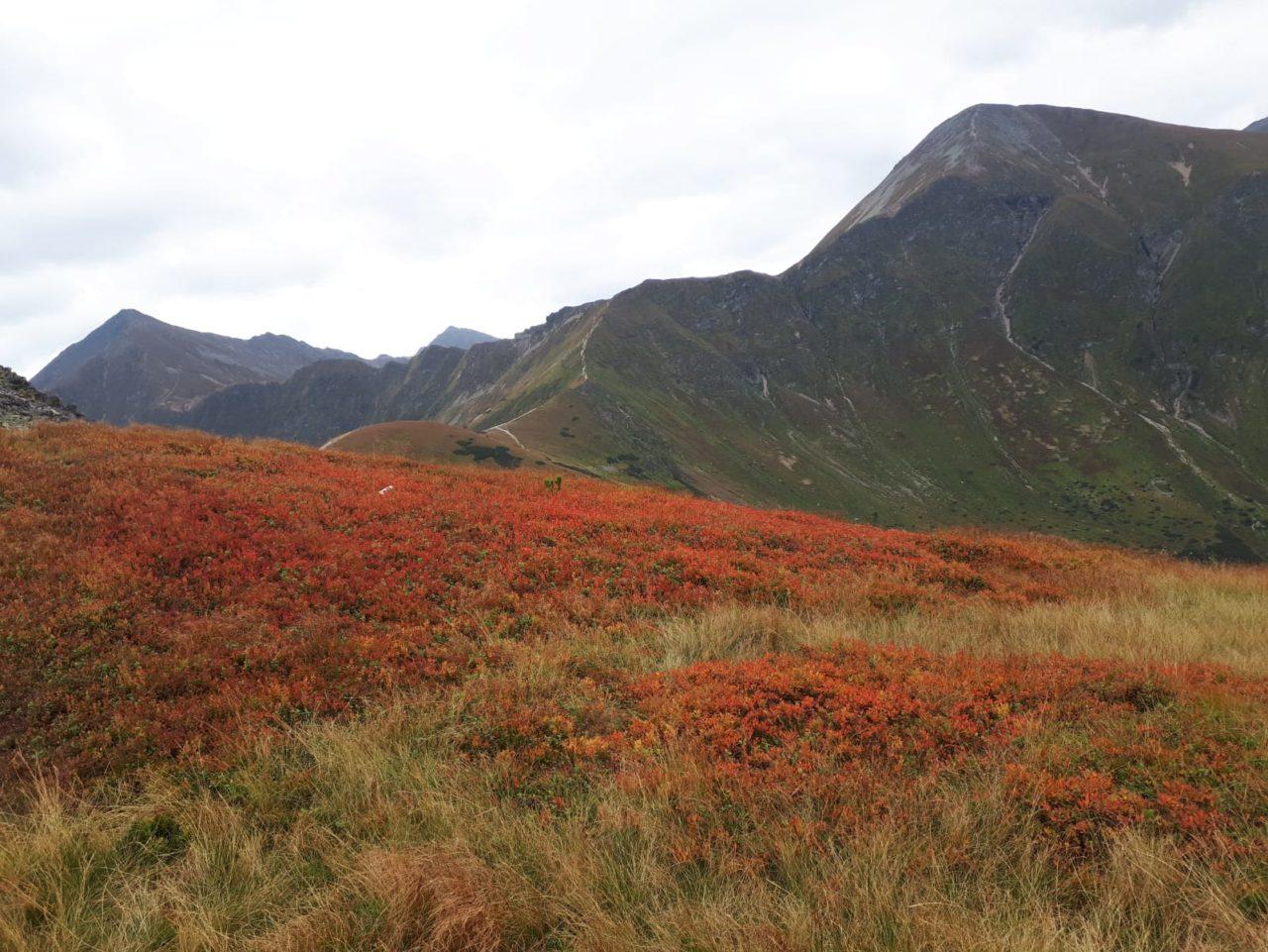 W Tatrach już jesiennie