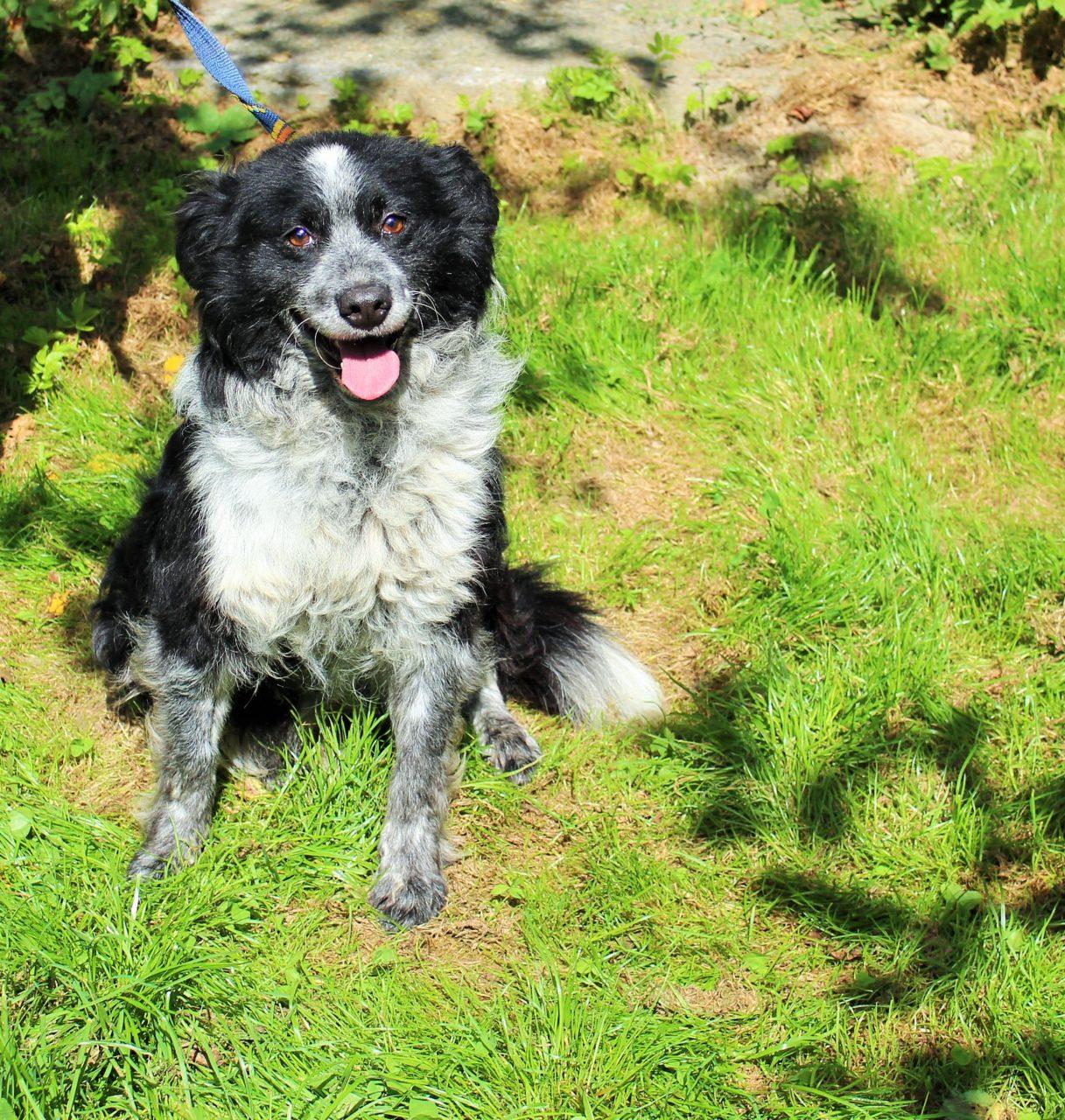 Pieski czekają na adopcję i nowy dom: