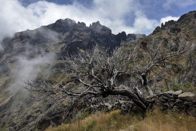 Madeira-3.jpg