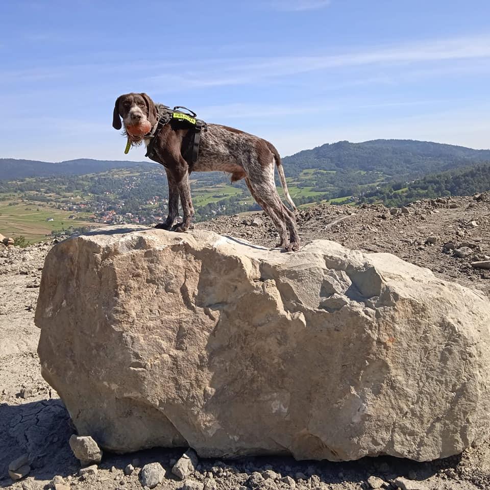 Szkolenie przewodników psów ratowniczych