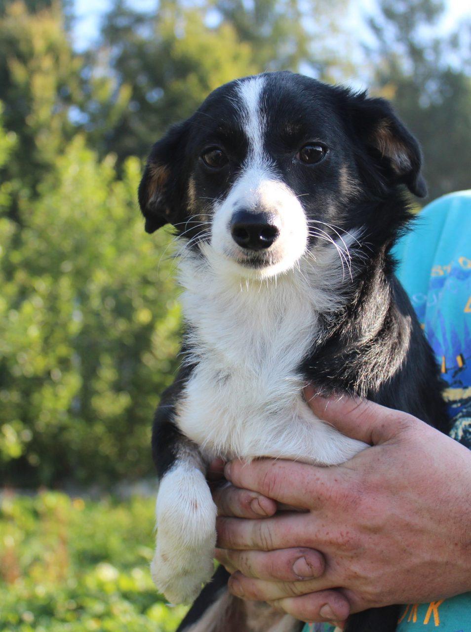 Psy z nowotarskiego schroniska czekają na adopcję