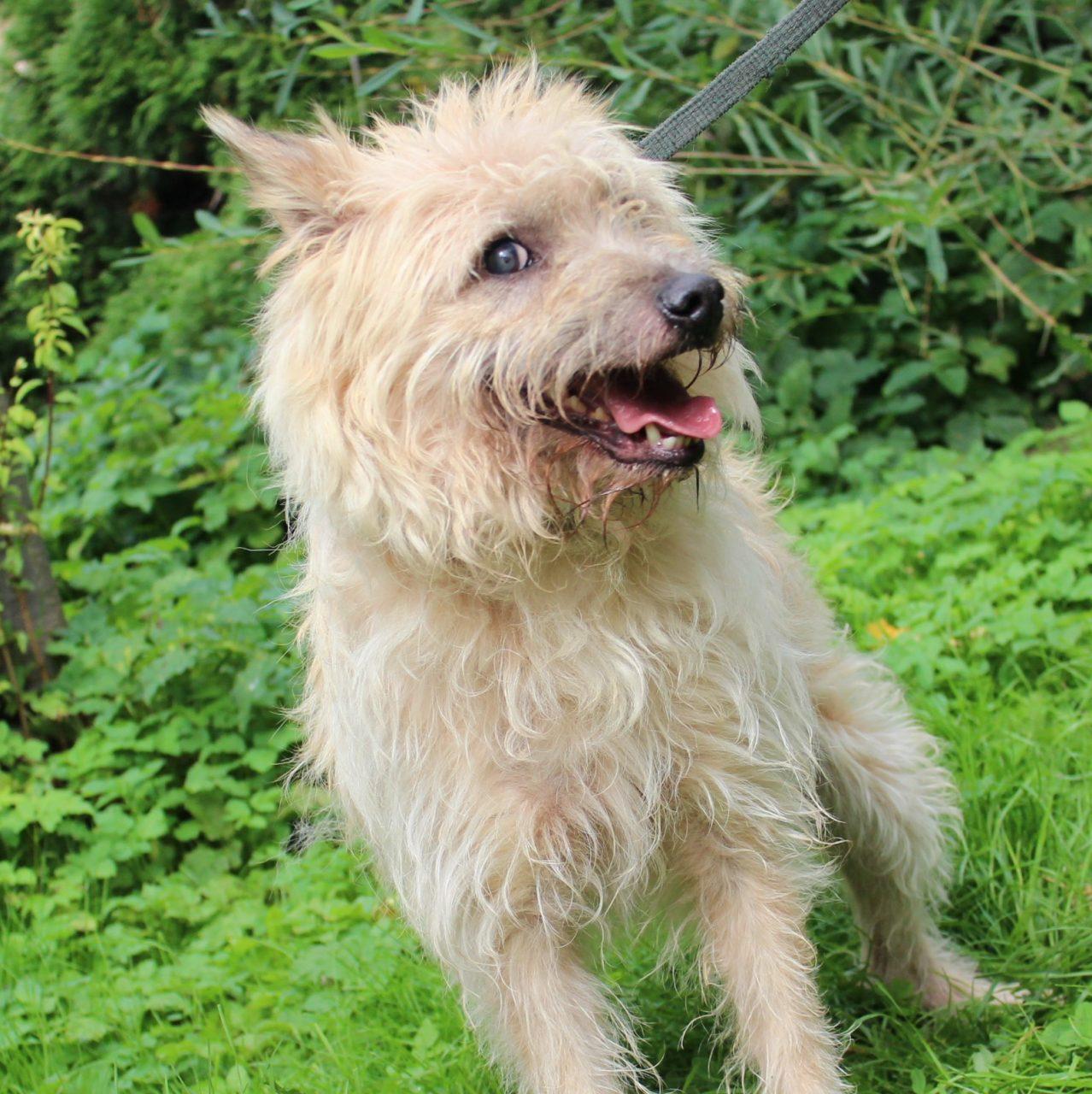 Psy z nowotarskiego schroniska czekają na adopcję i nowy dom